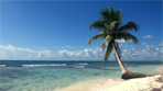 Tropical beach with palmtree
